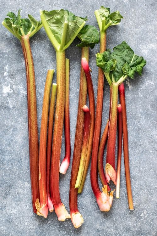 Rhubarb picking open day